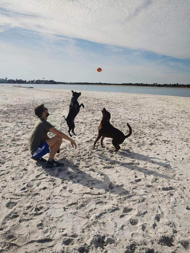 Brinquedos Resistentes para Cachorro, Frisbee